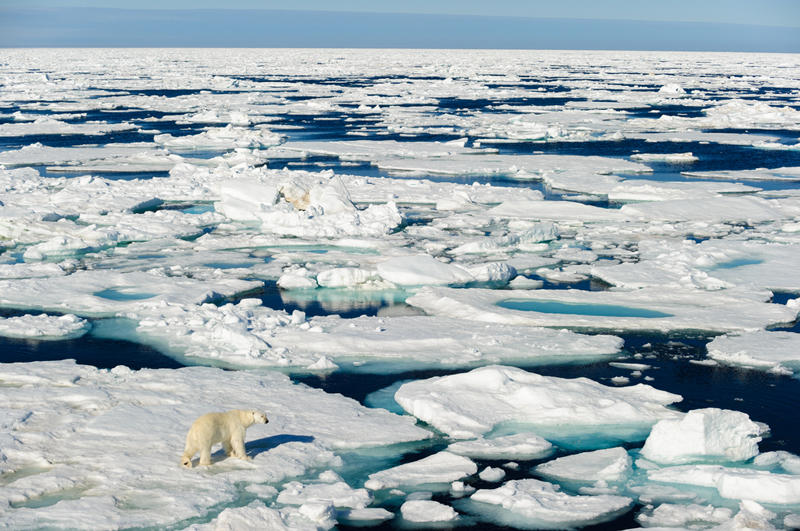 قطب شمالي