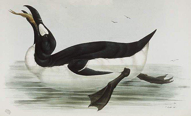 طيور البطريق 3120171