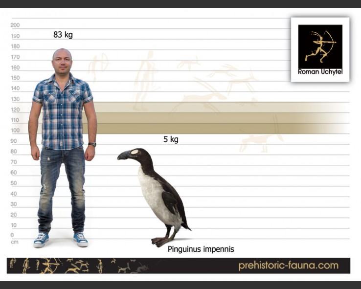 طيور البطريق 3120172
