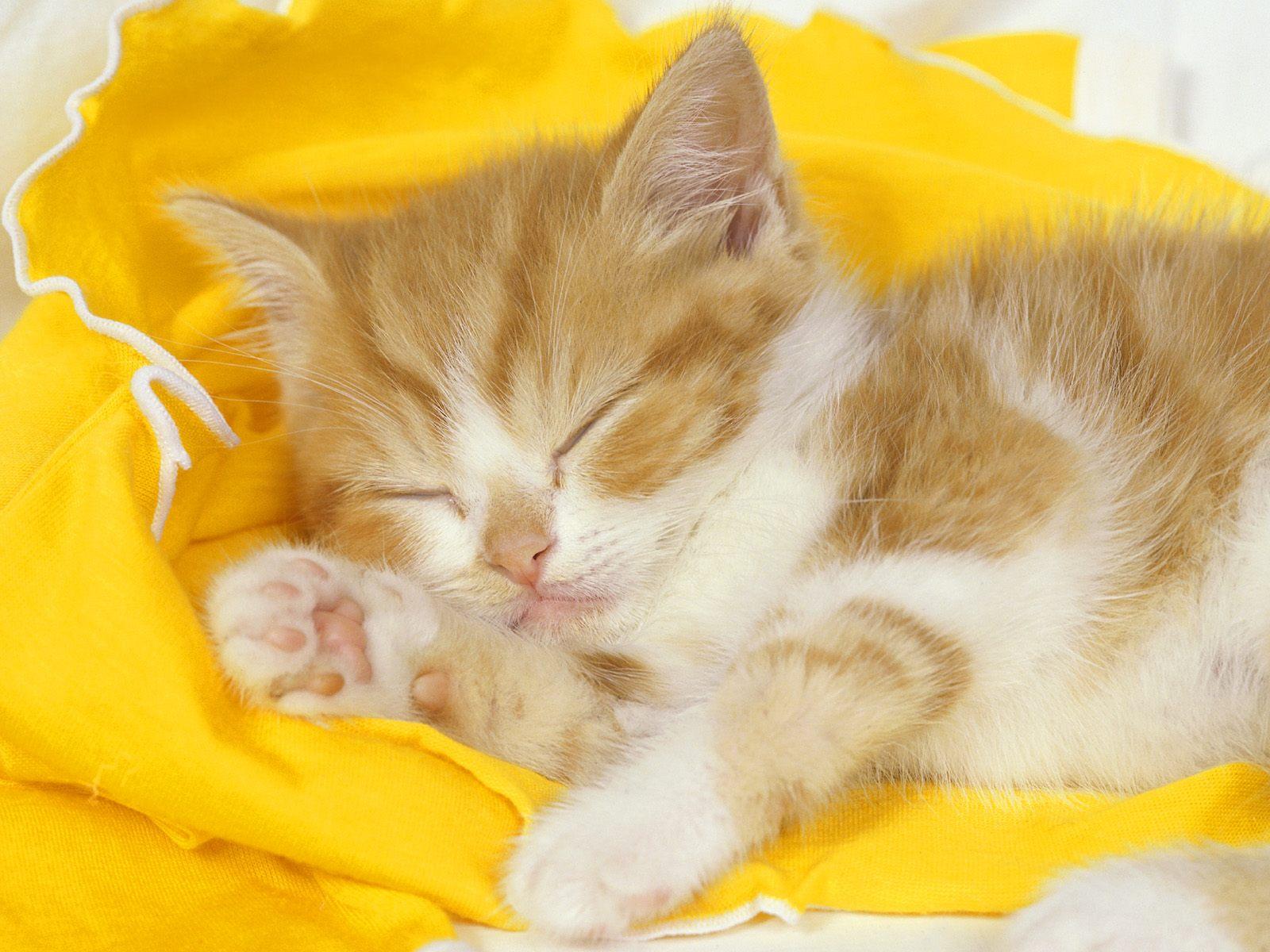 القطط تنام