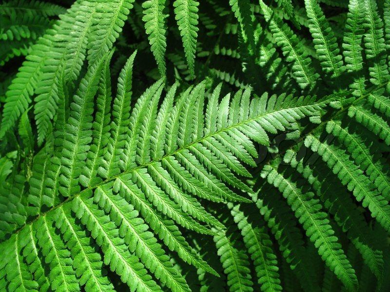 النبات يرى ويسمع