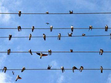 الطيور على الأسلاك