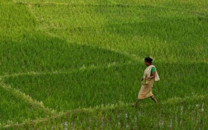 صور حول العالم: مزارعة هندية في حقل لزراعة الأرز والمزيد..