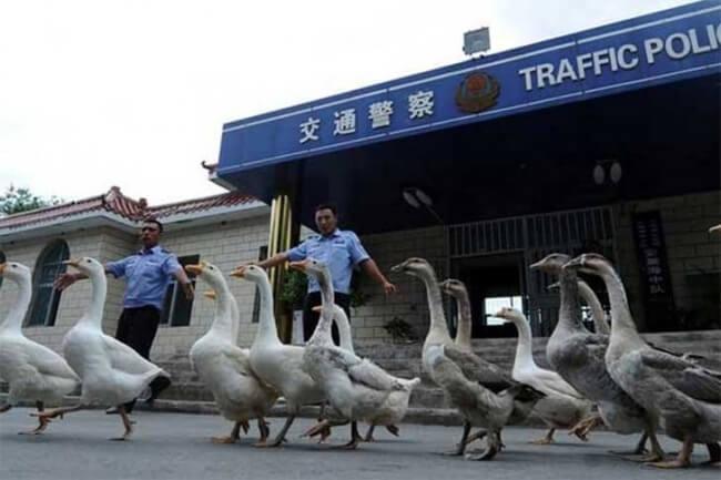 أشياء غريبة في الصين