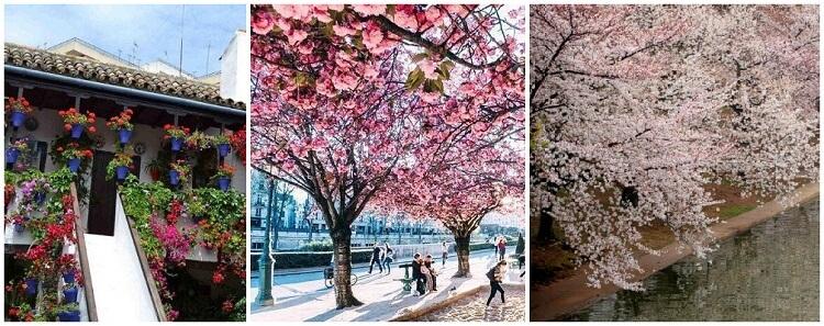 منوعات: من مهرجان الأفنية بقرطبة إلى جمال أزهار الكرز المتفتحة..