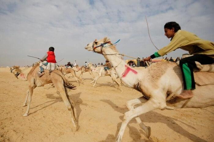 منوعات: سباق الهجن في الاسماعيلية بمصر والمزيد..