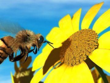 كيف يجد النحل طريق عودته