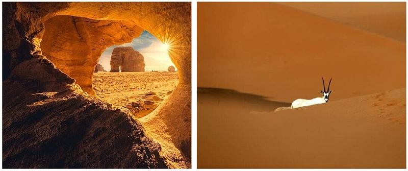 منوعات: من جبل الفيل في العلا + المها في محمية أم الزمول..