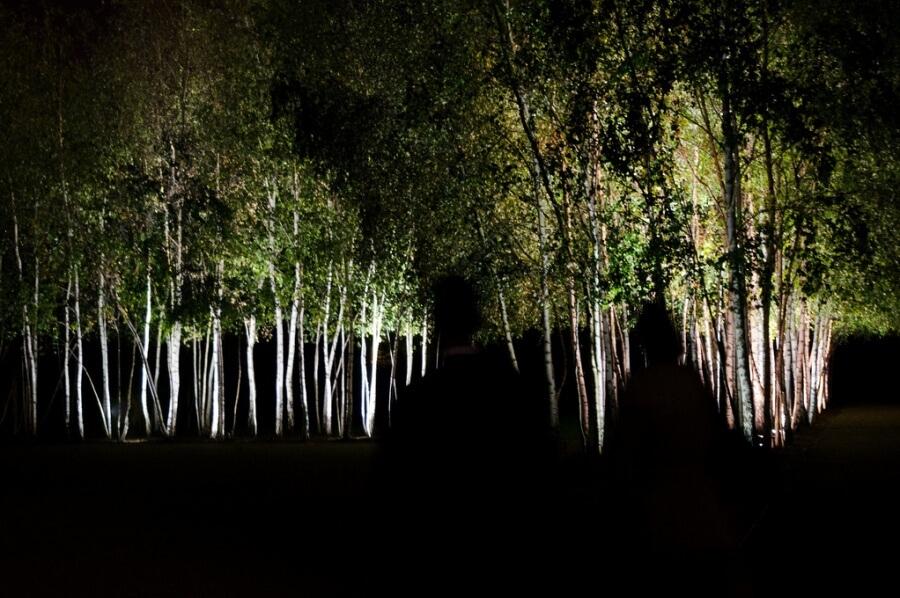 الغابة المقلوبة