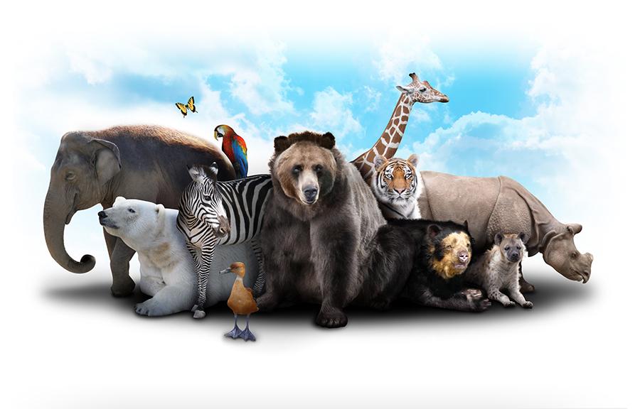 عدد الحيوانات
