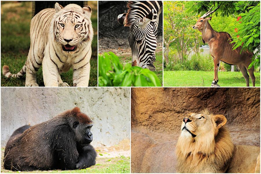 أعداد الحيوانات