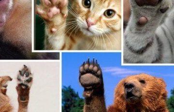 بصمات أصابع الحيوانات