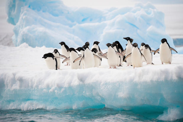 Penguins 274173