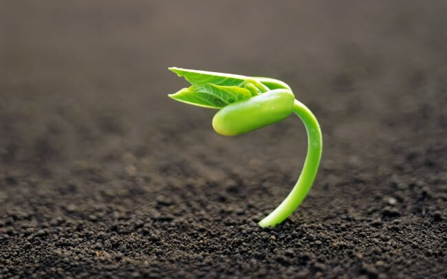 إنبات البذور
