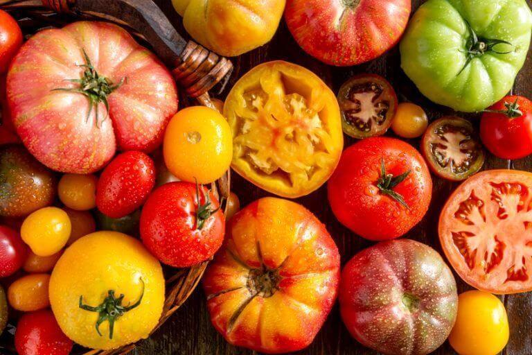 مهرجان الطماطم