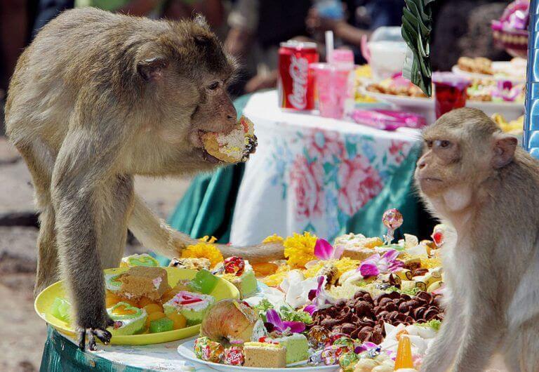 مهرجان القرود هو عادات وطنية غريبة