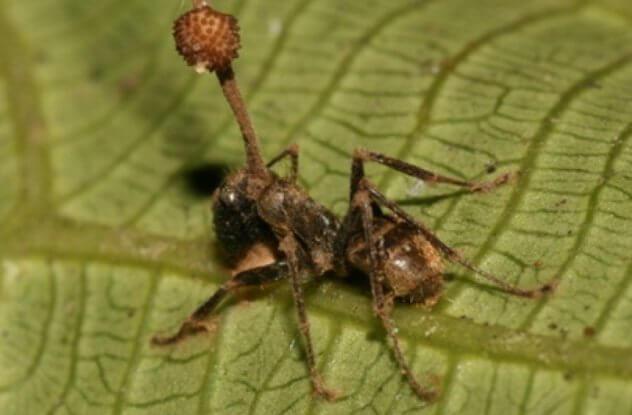 النمل المريض يُقتل