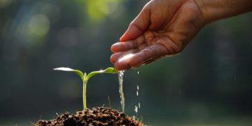نمو النباتات
