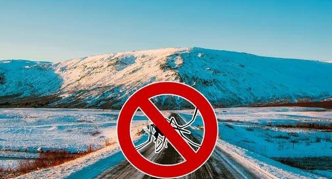 بعوض في آيسلاند