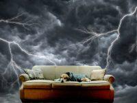 خوف الكلاب من العاصفة