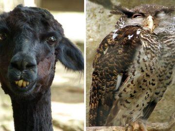صور الحيوانات المضحكة