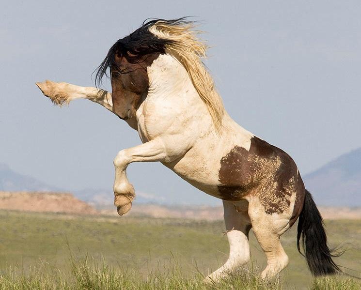 الخيول والكلاب في الأيام العاصفة