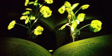 Plants Glow