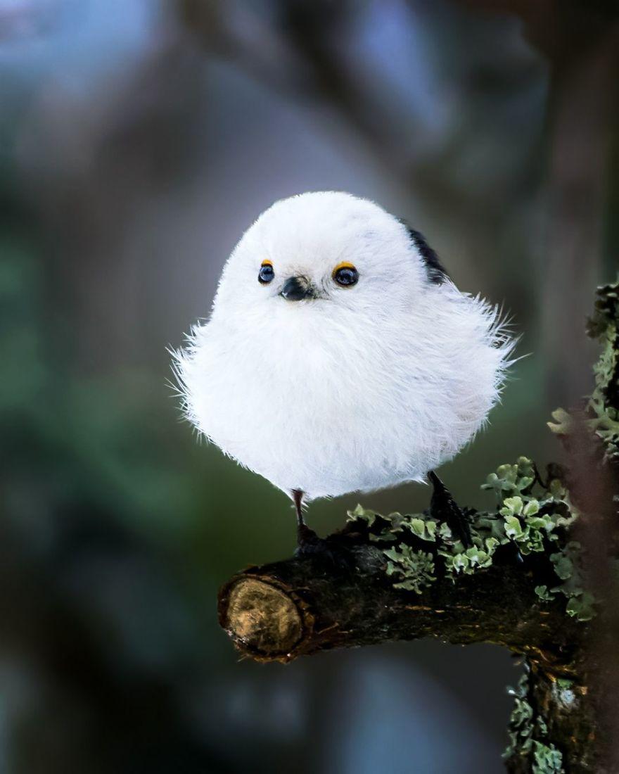 حياة الطيور الغاضبة Angry Birds في الواقع