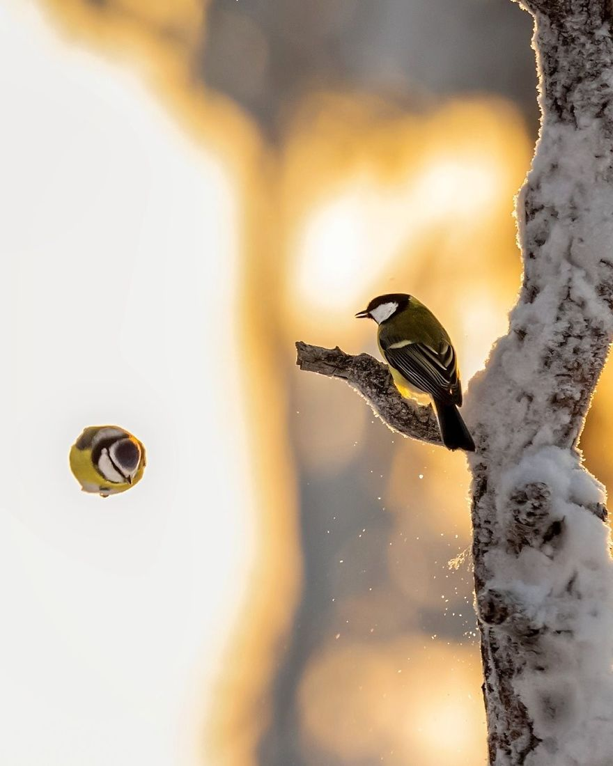 Angry Birds في الحياة الحقيقة