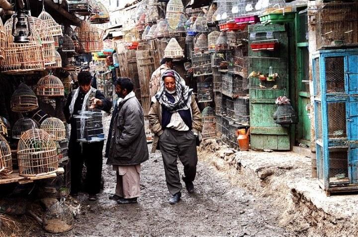 سوق كافاروشي للطيور