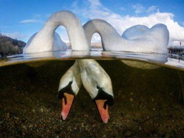 مسابقة التصوير تحت الماء
