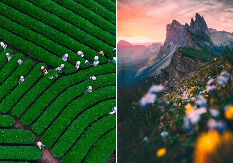منوعات: الشروق الجميل من جبال دولوميت + قطف أوراق الشاي في فيتنام، والمزيد..