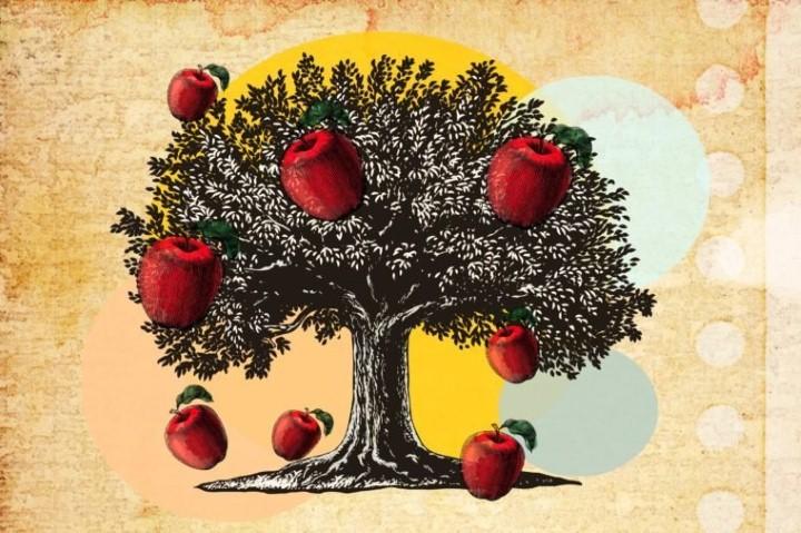 تفاحة إسحاق نيوتن