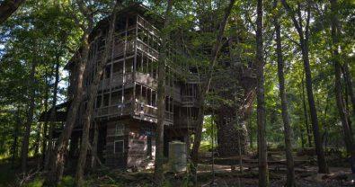 بيت شجرة
